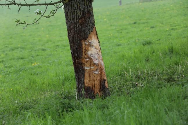 Autolenkerin kracht bei Unfall in Pichl bei Wels gegen Obstbäume | Foto: laumat.at/Matthias Lauber