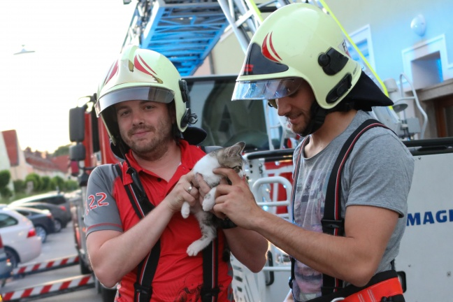 Verängstigtes Kätzchen durch Feuerwehr vom Dach eines Hauses in Wels-Vogelweide gerettet | Foto: laumat.at/Matthias Lauber