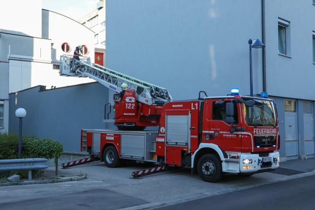 Verletzter Vogel durch Feuerwehr vom Dach eines Gebäudes in Wels-Innenstadt gerettet   Foto: laumat.at/Matthias Lauber