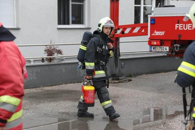 Hornissen verstopften Kamin eines Wohnhauses in Wels-Schafwiesen | Foto: laumat.at/Matthias Lauber