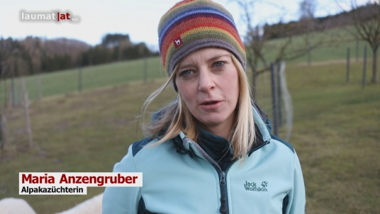 Maria Anzengruber, Alpakazüchterin