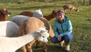 Alpakas auf Farm in Schlüßlberg vergiftet
