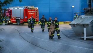 Rehkitz durch Feuerwehr aus Lagerhalle in Wels-Neustadt gerettet