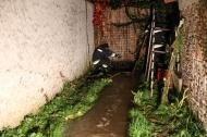 Feuerwehr bei hochwasserf�hrendem Gr�nbach in Wels-Neustadt im Einsatz   Fotograf: Matthias Lauber