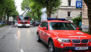 Baumbr�tende Entenv�gel sorgten f�r Einsatz der Feuerwehr in Wels