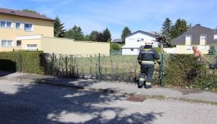 Heckenbrand in Wels-Pernau schnell abgel�scht