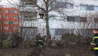 Feuerwehr musste statt Katze einen Jugendlichen vom Baum retten