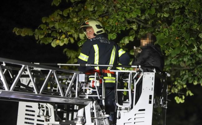 """Kater """"Wolle"""" durch Feuerwehr vom Dach eines Hauses in Wels-Lichtenegg gerettet"""