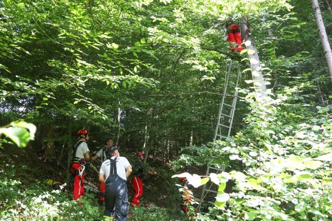 Höhenretter der Feuerwehr retten Katze aus luftiger Höhe von Baum