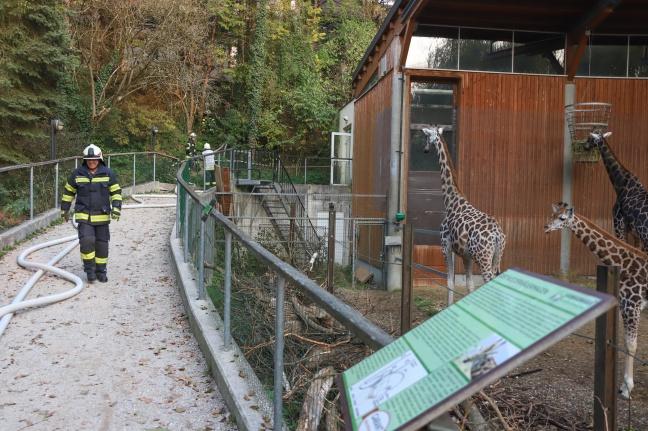 Große Einsatzübung zwischen Giraffen, Pelikanen, Besucherinnen und Besuchern im Zoo Schmiding