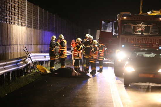 Führerscheinloser 30-Jähriger verursachte den schweren Unfall mit einem Pferdetransporter