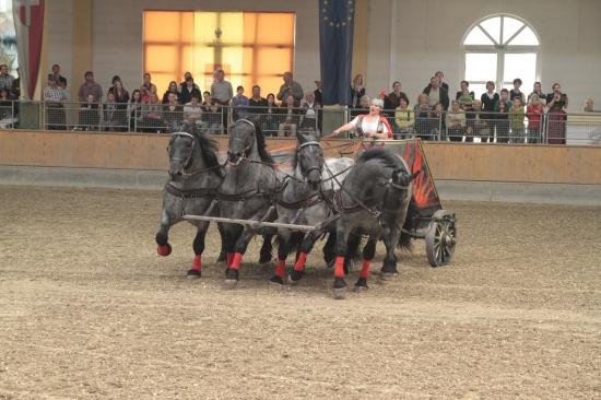 Heiße Eisen im Pferdezentrum Stadl-Paura